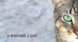 ترس از گربه ها (Ailurophobia) و راه های درمانی