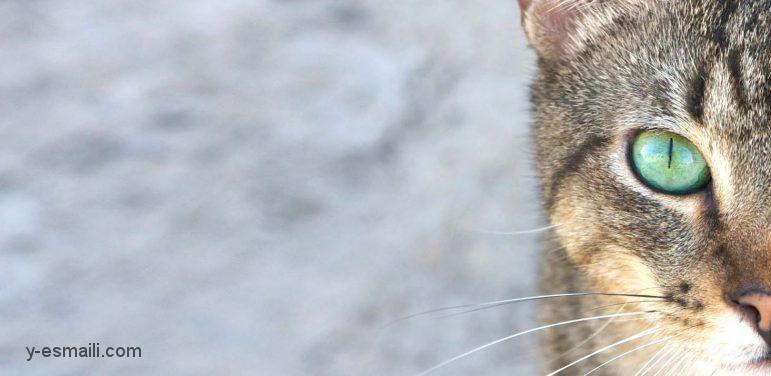 شناخت ترس از گربه ها (Ailurophobia) و راه های درمانی